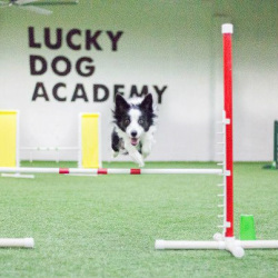 Dog Obedience Training Chicago South Suburbs